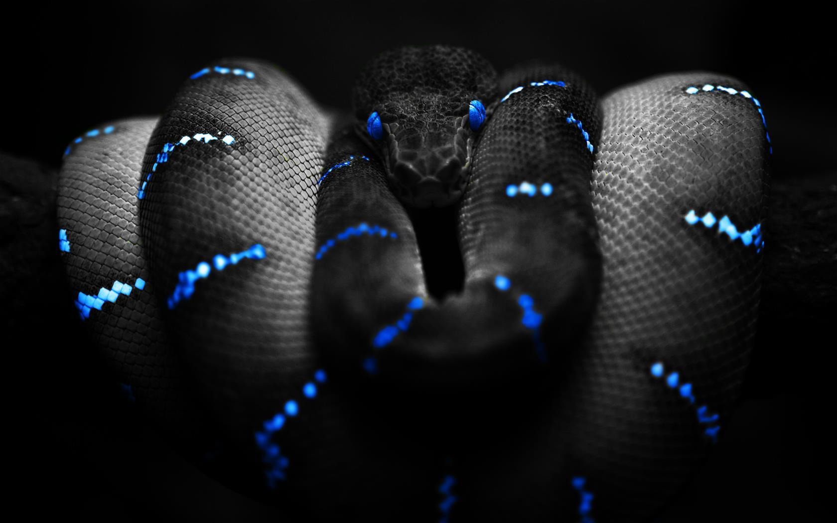 serpent-fonds-d-ecran-effets-lumiere-et-retouche-photo_05