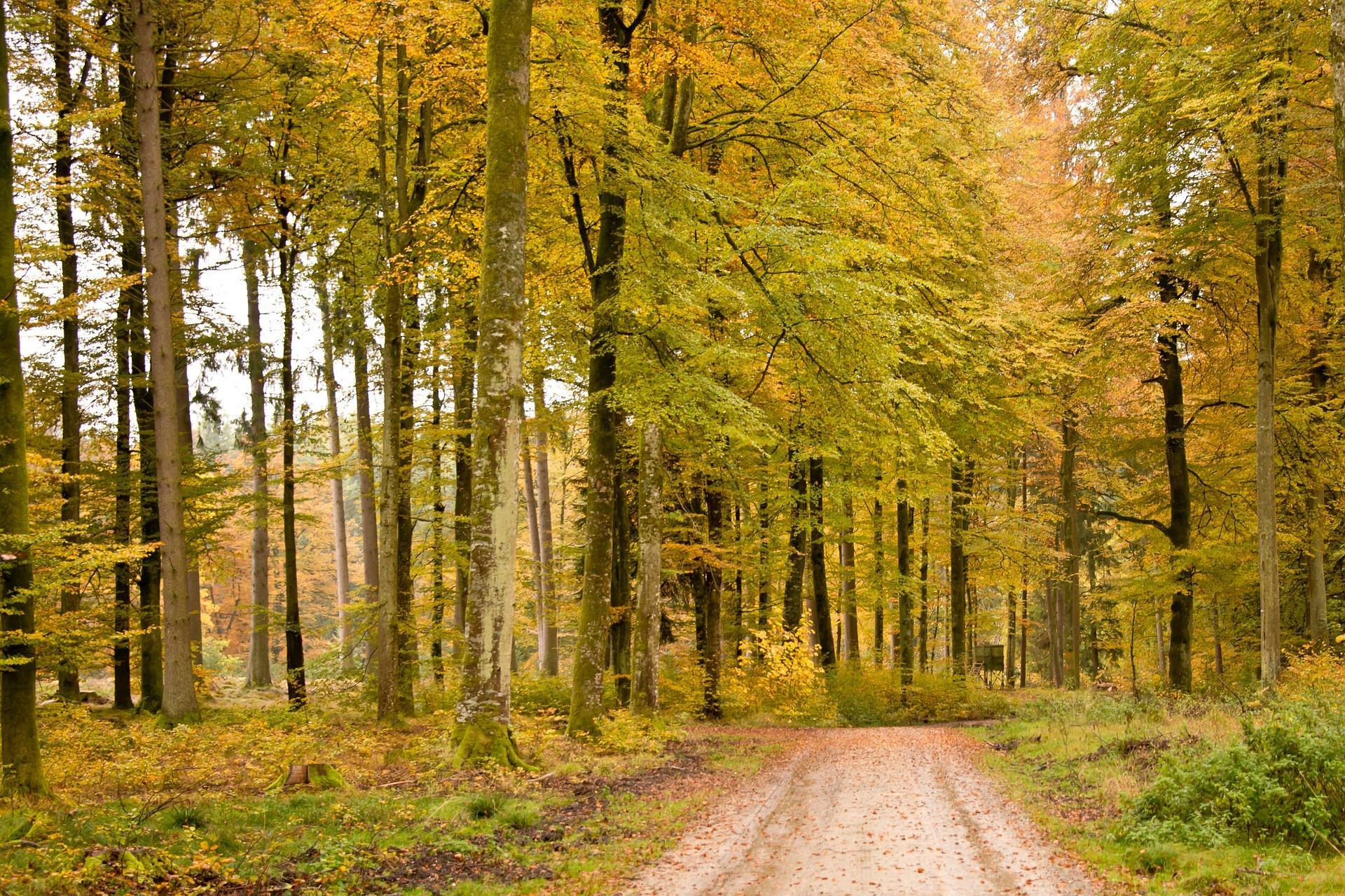 automne-paysage_wallpapers-free_3
