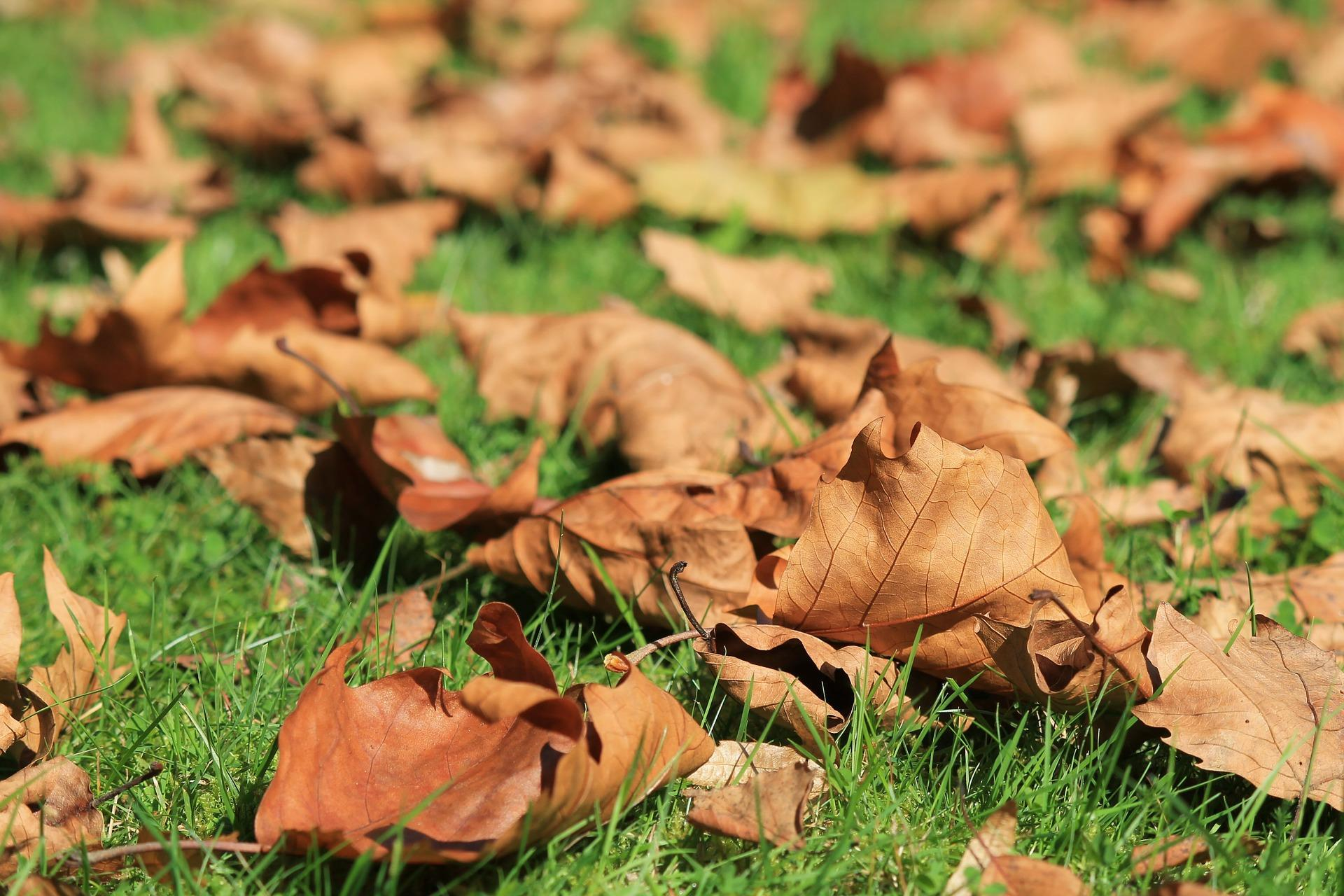 feuilles-automne_wallpapers-free_3
