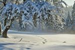 hiver-en-fond-d-ecran_free-download-pictures_arbre