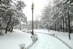 hiver-en-fond-d-ecran_free-download-pictures_city