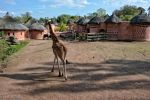 safari-en-afrique-visite-un-village-photo-HD-2000-pixels_2