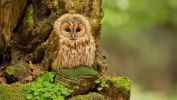chouette-ou-hibou_animaux-sauvages_2