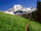 US_Mount-Baker-Snoqualmie-National-Forest-Washington