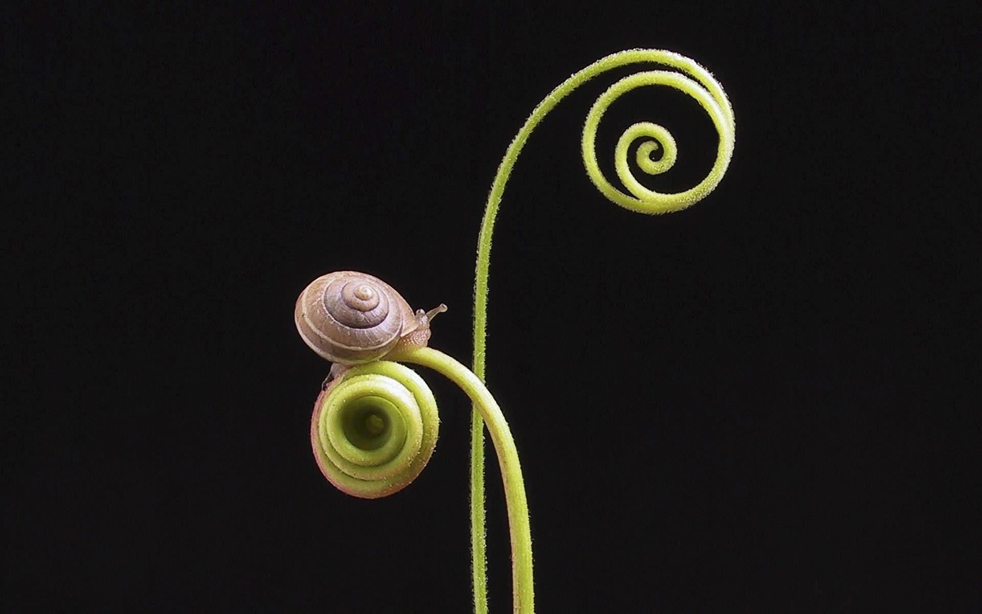 escargot-windows10-wallpaper_1