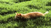 serie-one_nos-amis-les-chats_HD_6