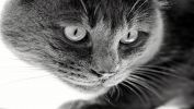 serie-one_nos-amis-les-chats_HD_7