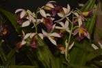 bouquet-floral-orchidees-exposition