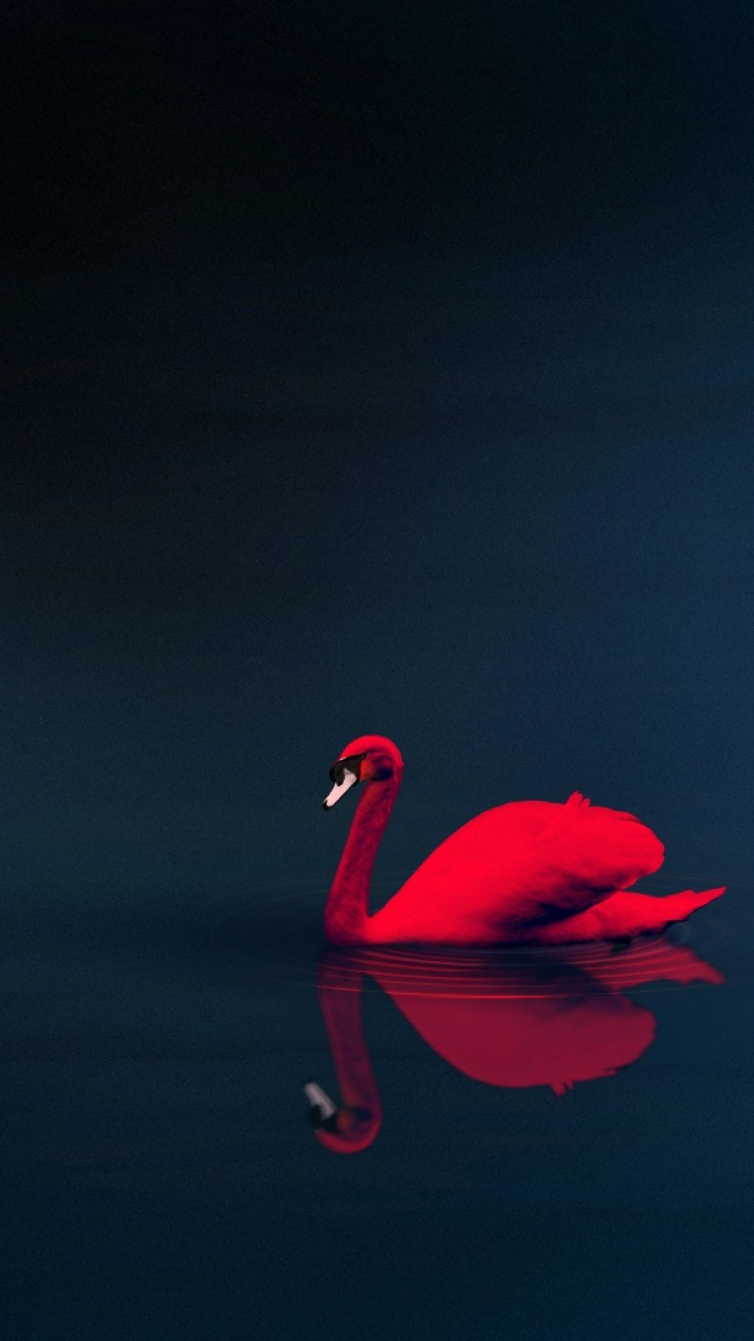 cygne-rouge-android-fonds-ecran