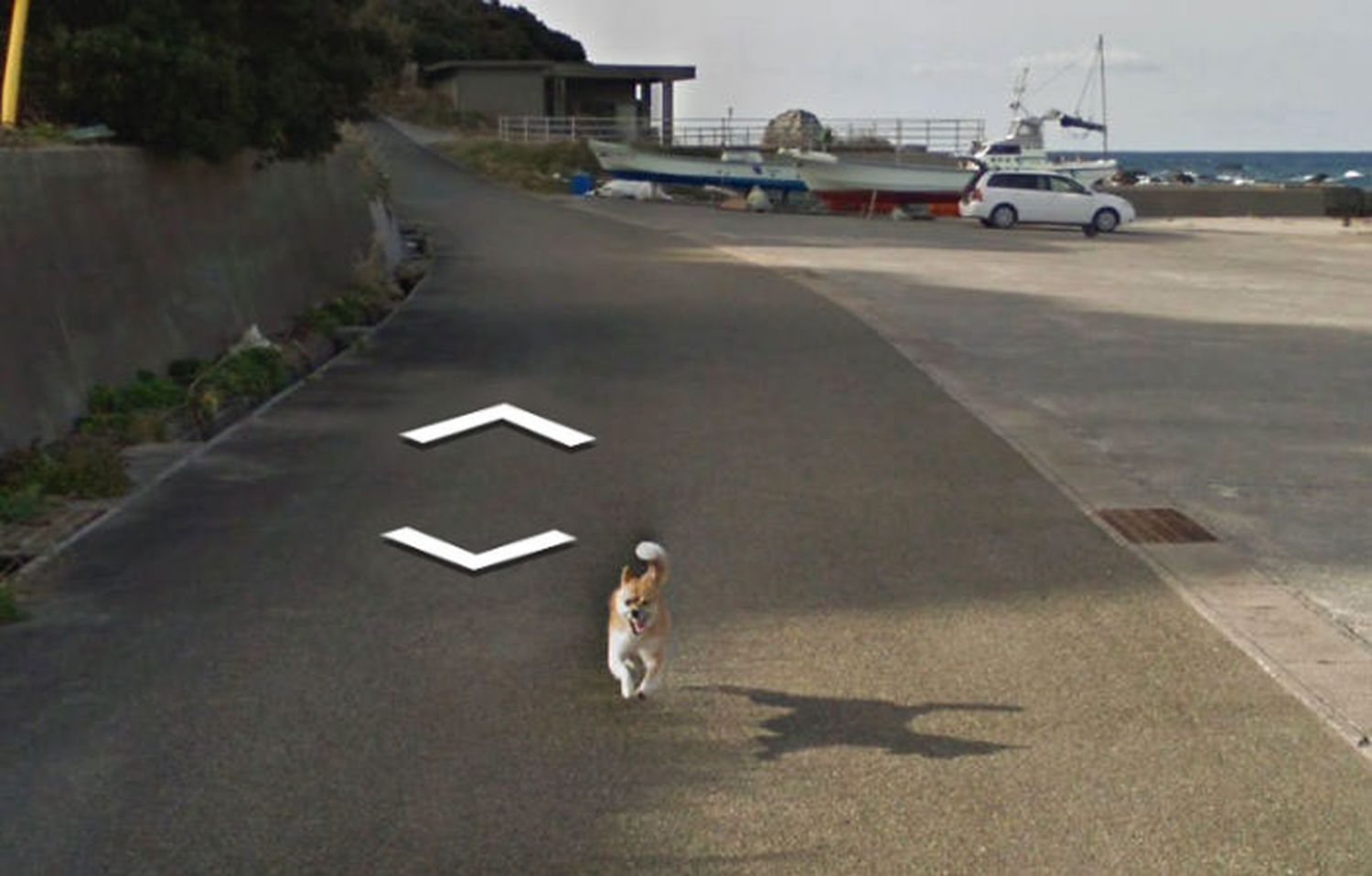 chien-photos-by-Google-Street-View