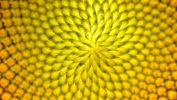 macro-photo-tournesols-fractal