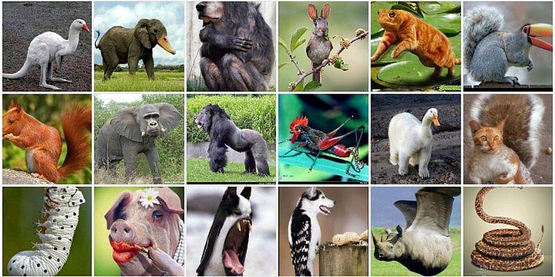 animaux croisés
