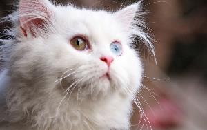 un chat sur votre écran