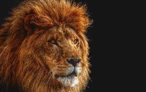 roi des animaux