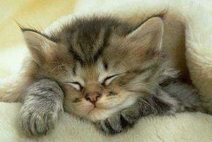 fonds d'écran animaux : chats et chatons