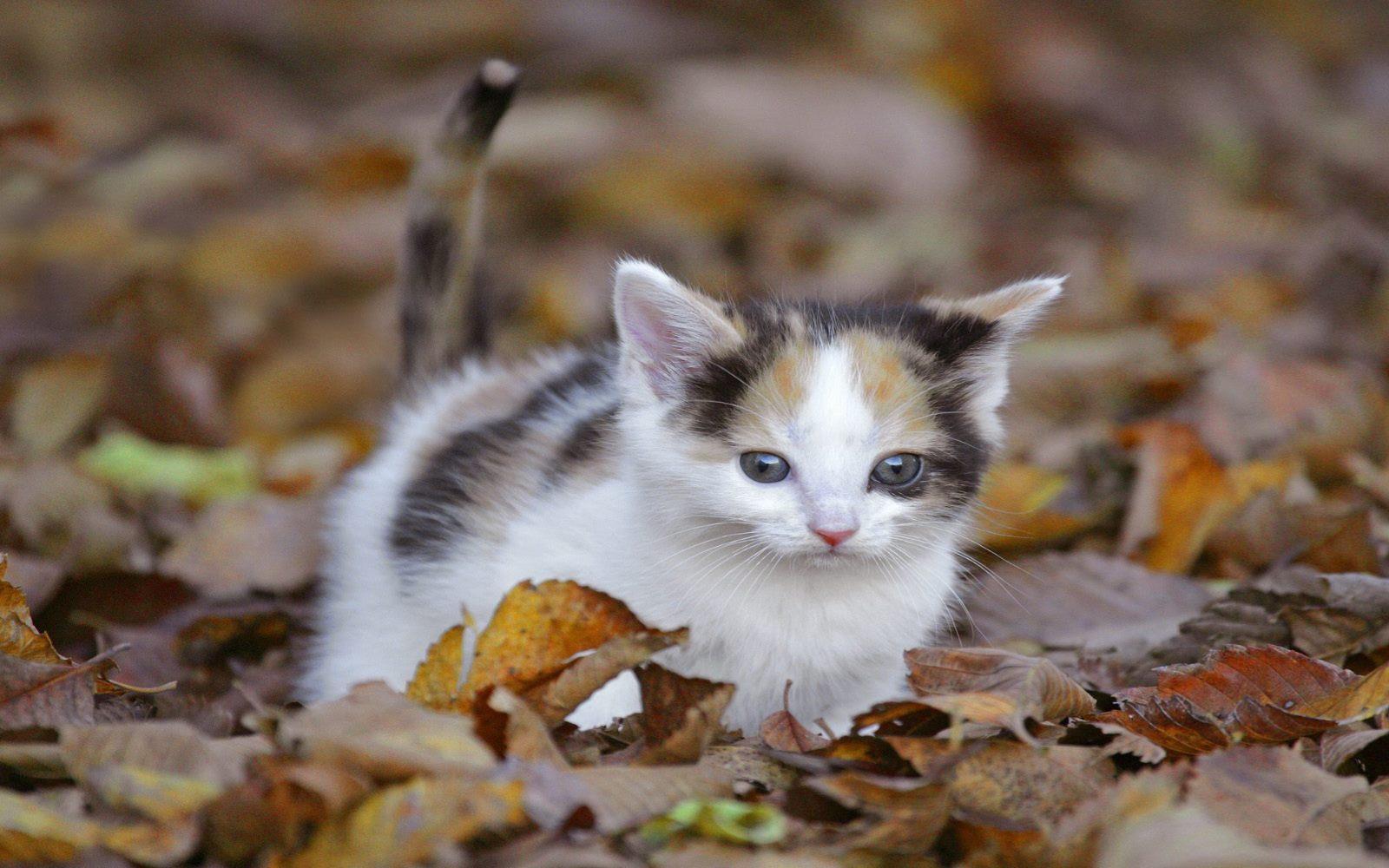 fond-ecran_animaux_chats_01