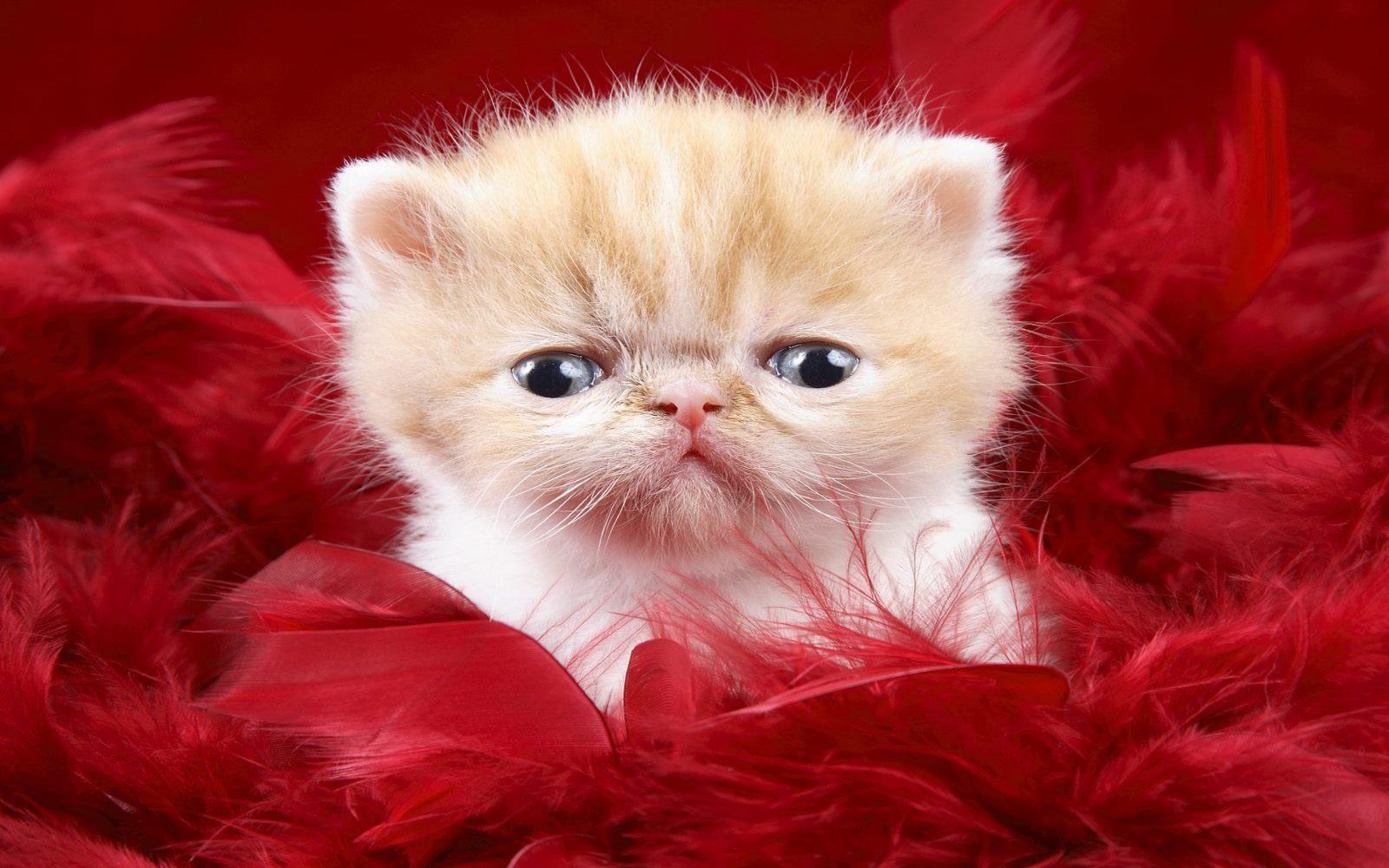 fond-ecran_animaux_chats_02