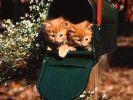 fond-ecran_animaux_chats_04