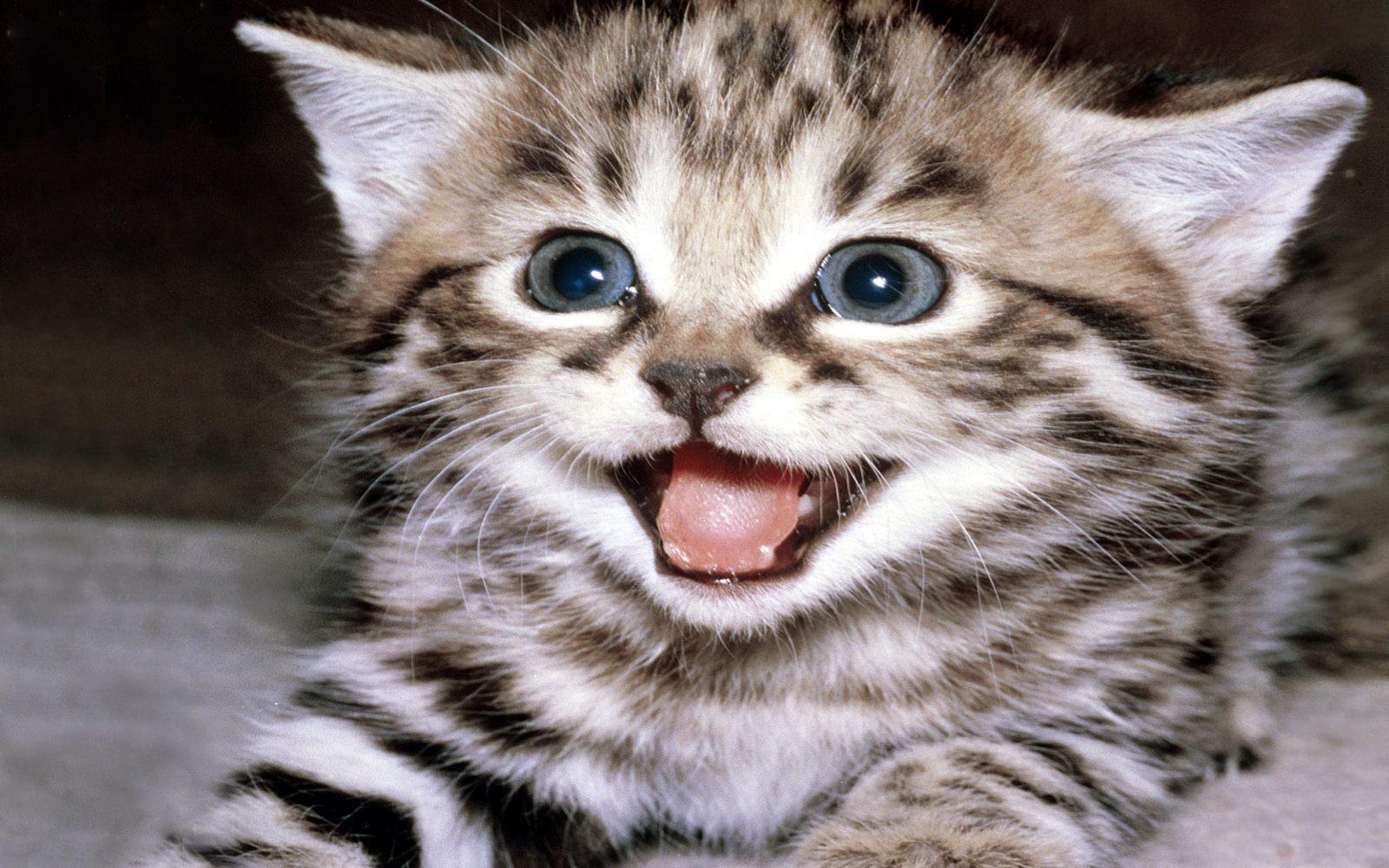 fond-ecran_animaux_chats_10