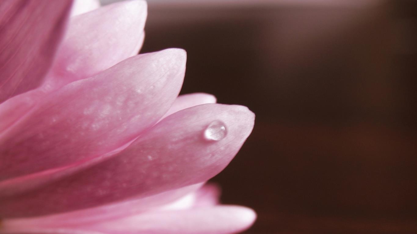 belles-fleurs_fonds-ecran_01