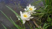 belles-fleurs_fonds-ecran_03