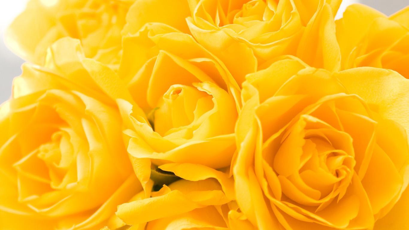 belles-fleurs_fonds-ecran_05