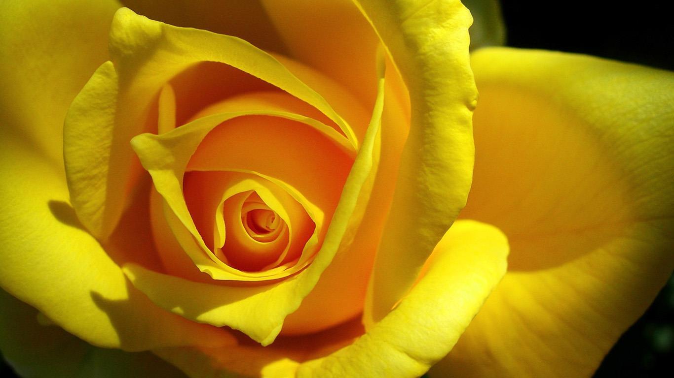 belles-fleurs_fonds-ecran_06