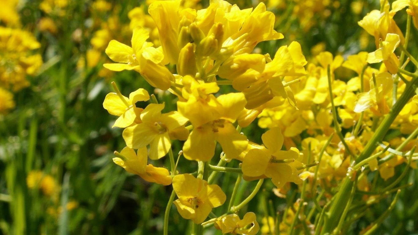 belles-fleurs_fonds-ecran_09