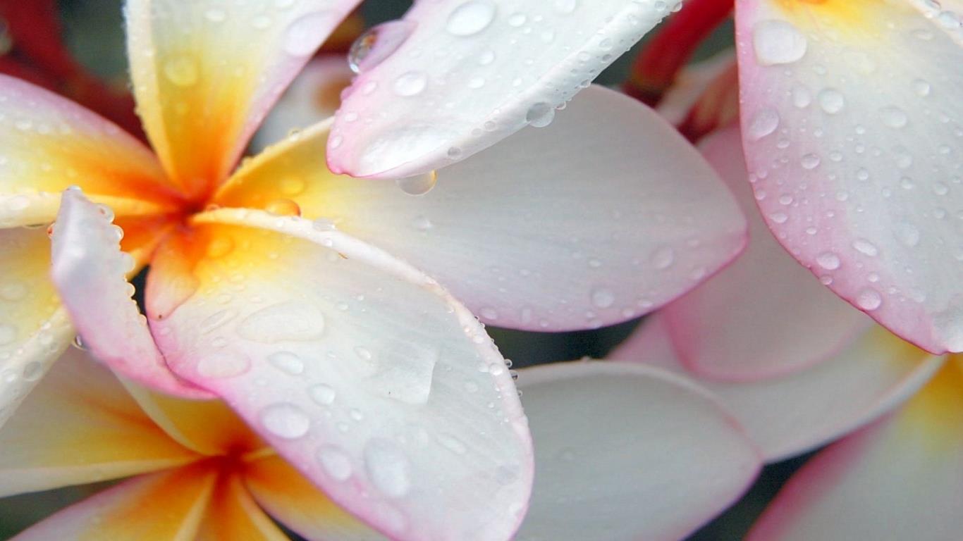 belles-fleurs_fonds-ecran_10