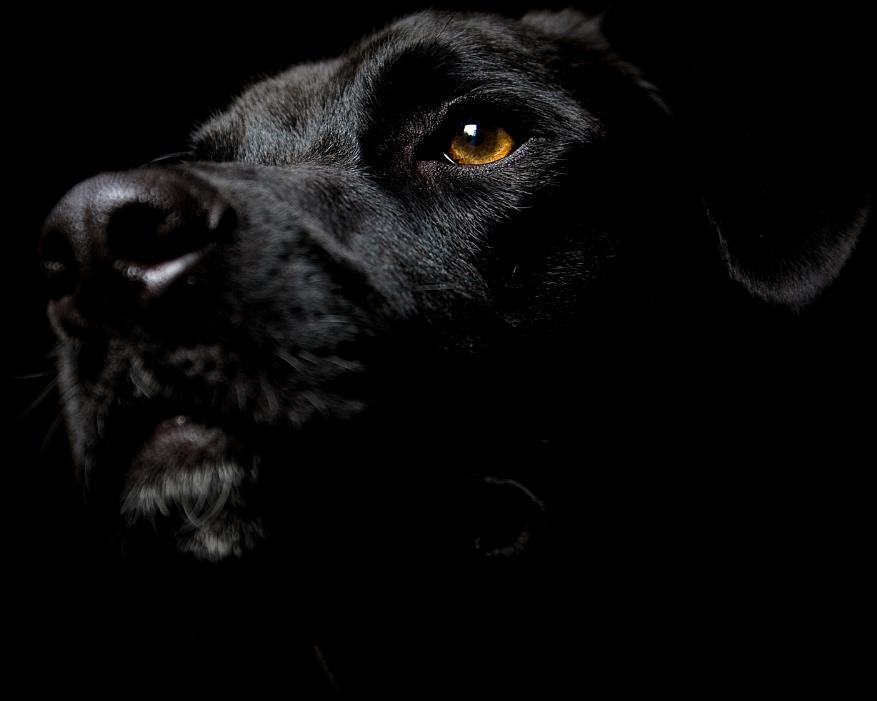 entre-chiens-et-loups_09