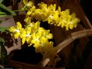 orchidees_photos-HD_exposition_florale_et_bouquets_01