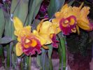 orchidees_photos-HD_exposition_florale_et_bouquets_03