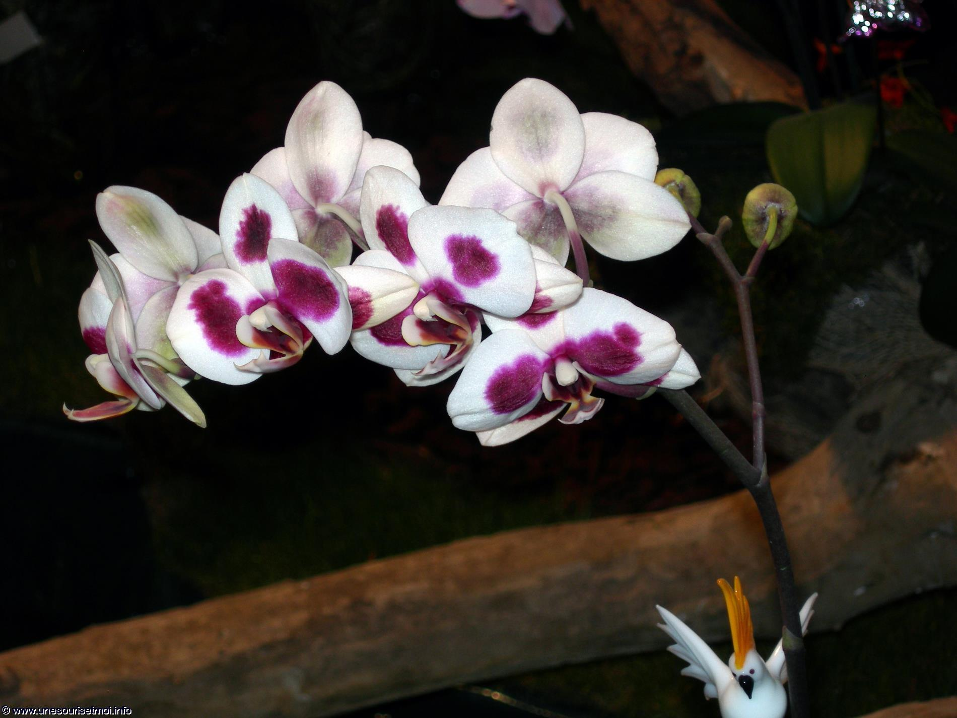 orchidees_photos-HD_exposition_florale_et_bouquets_05