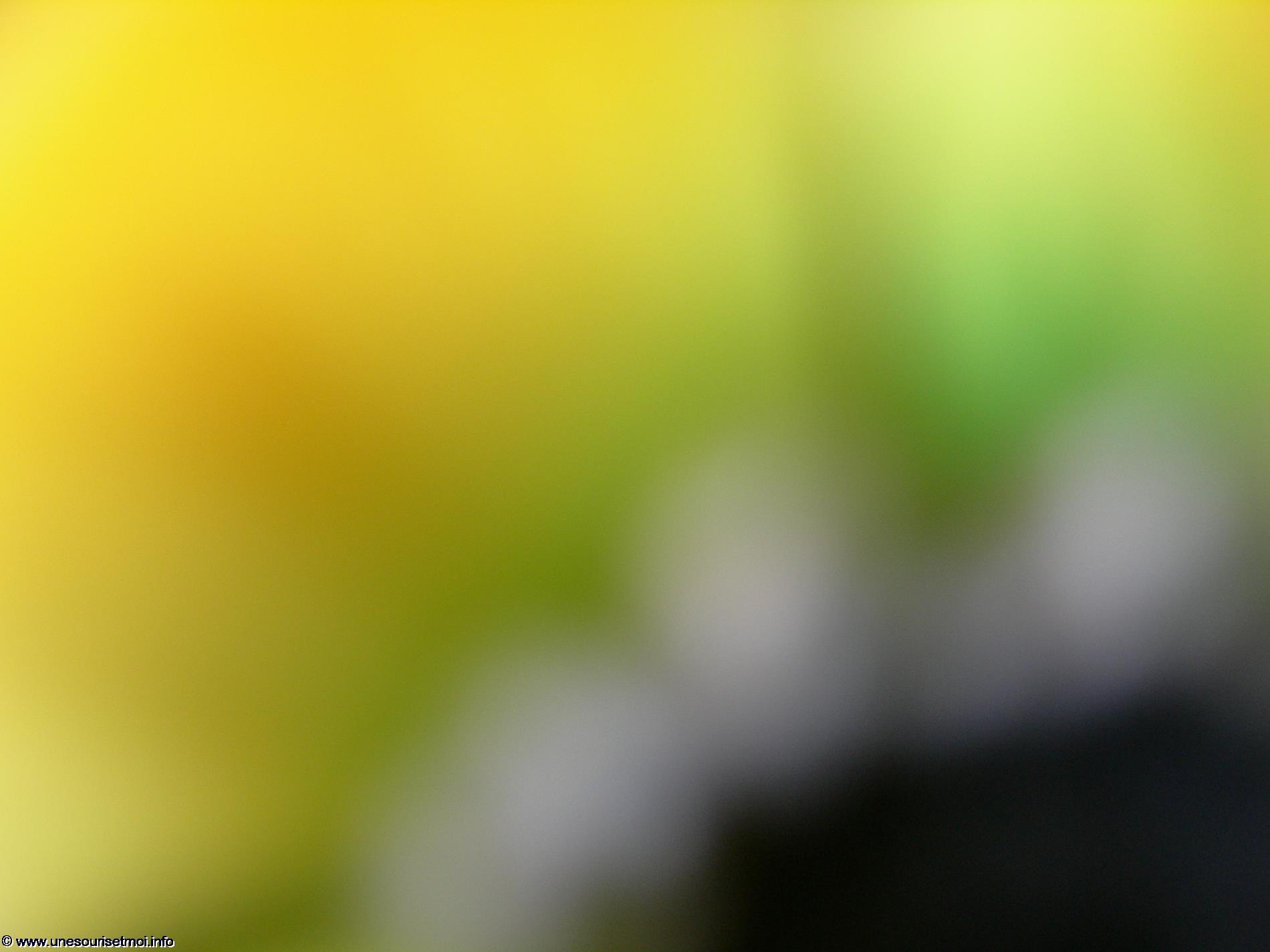 photographies_de_fonds-colores_et_textures-libres_gratuites_10