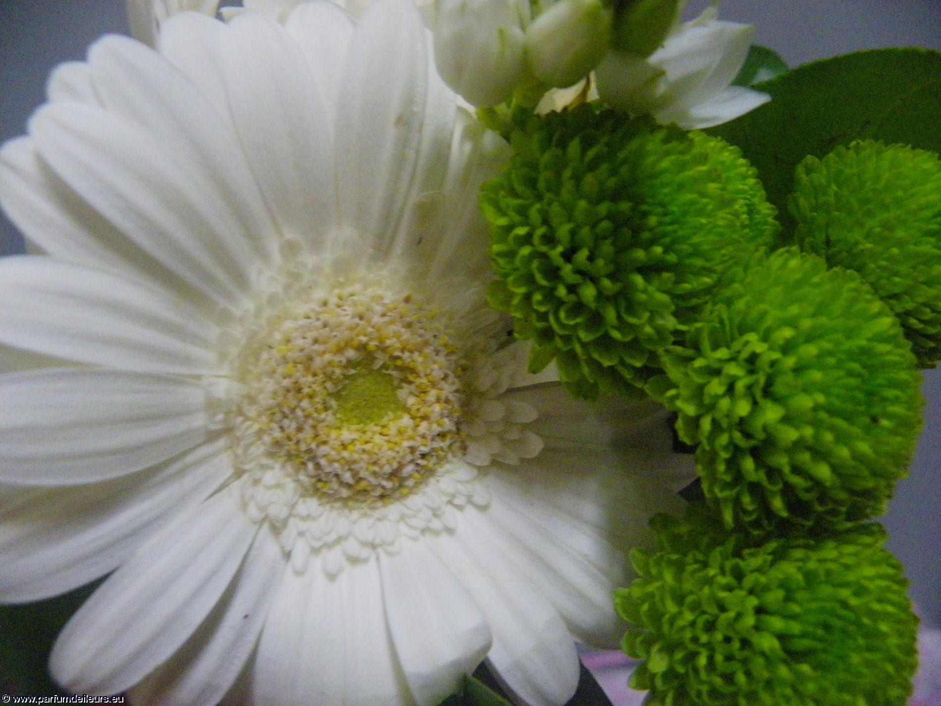 offrir-des-fleurs_fonds-ecran_03