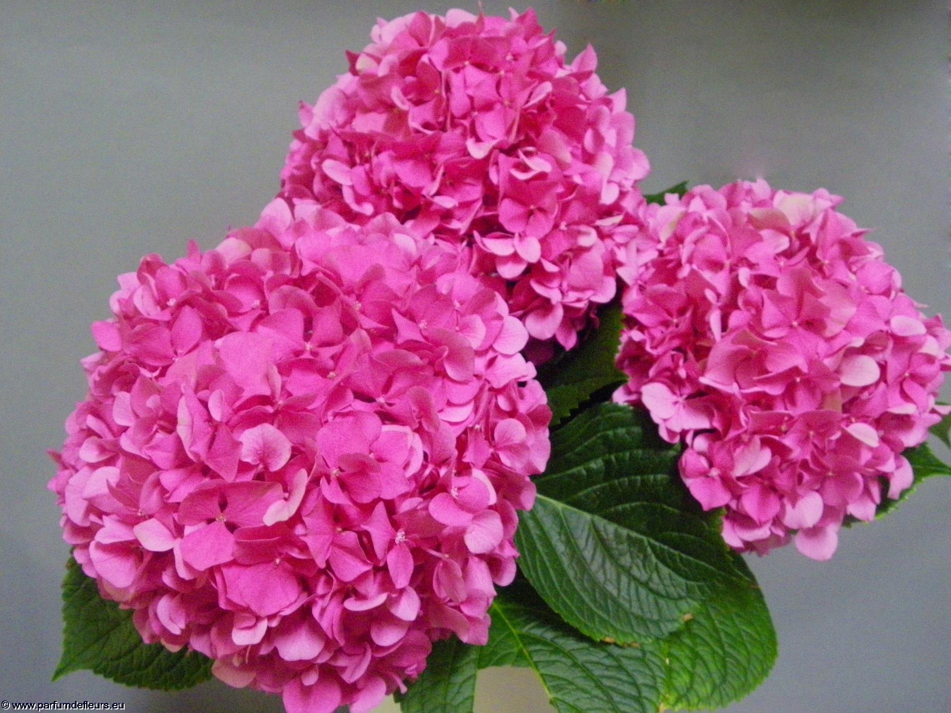 offrir-des-fleurs_fonds-ecran_04