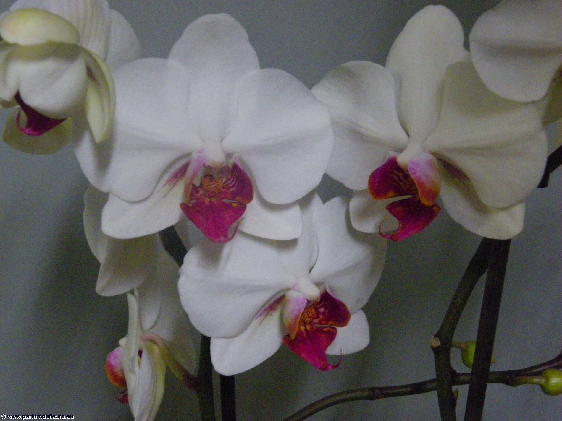 offrir-des-fleurs_fonds-ecran_10