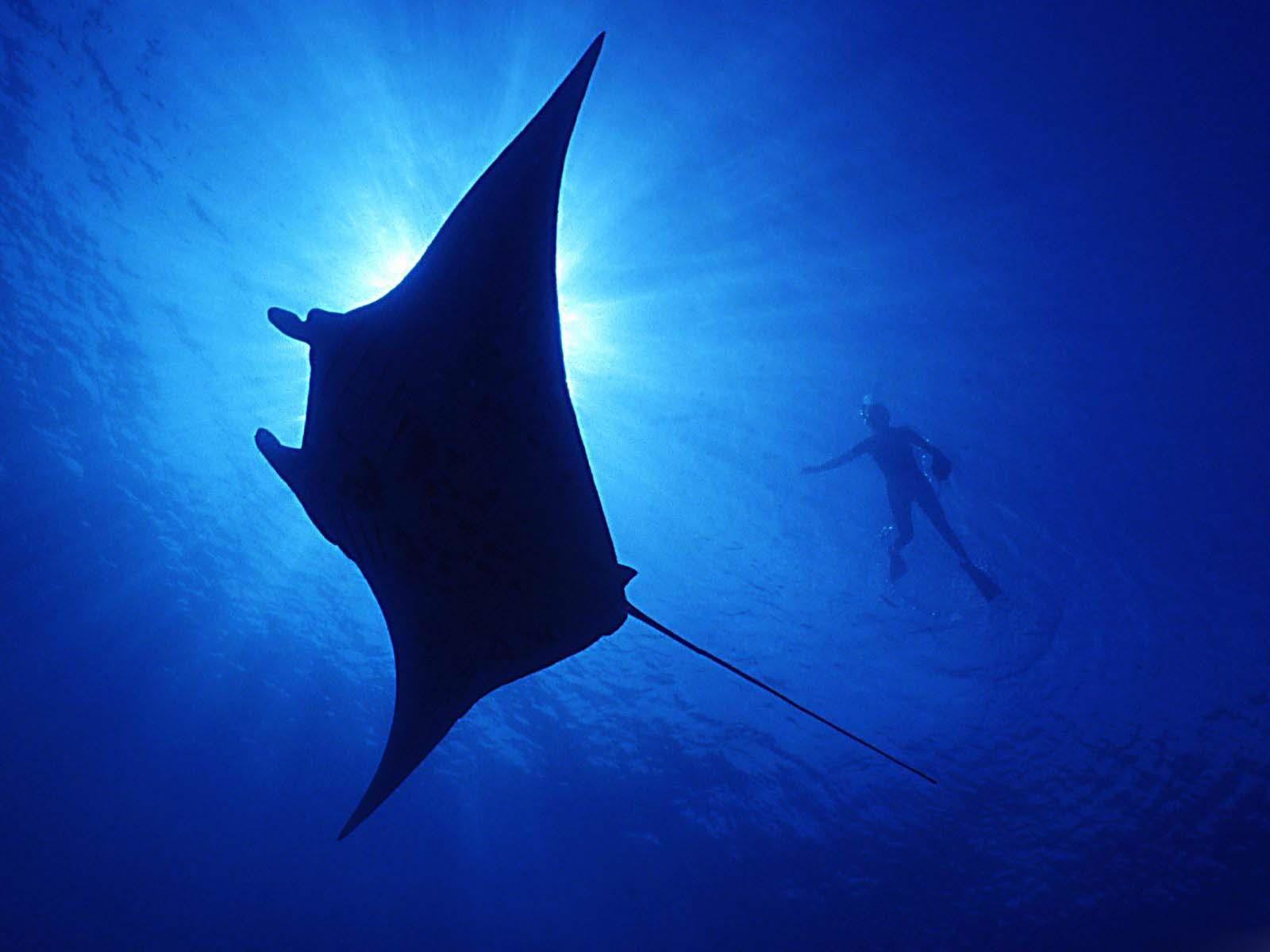 vie-sous-marine_underwater_01