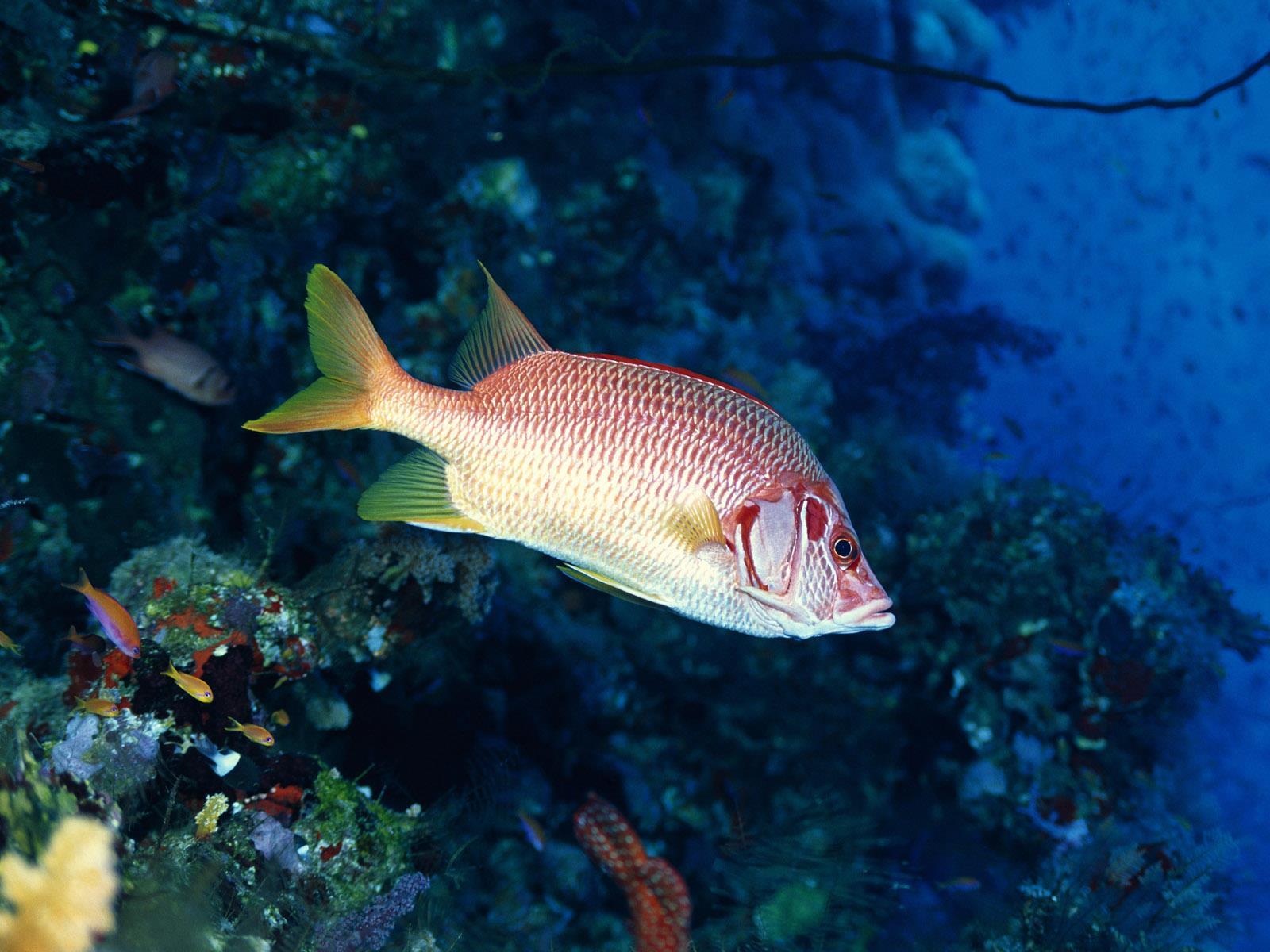 vie-sous-marine_underwater_02