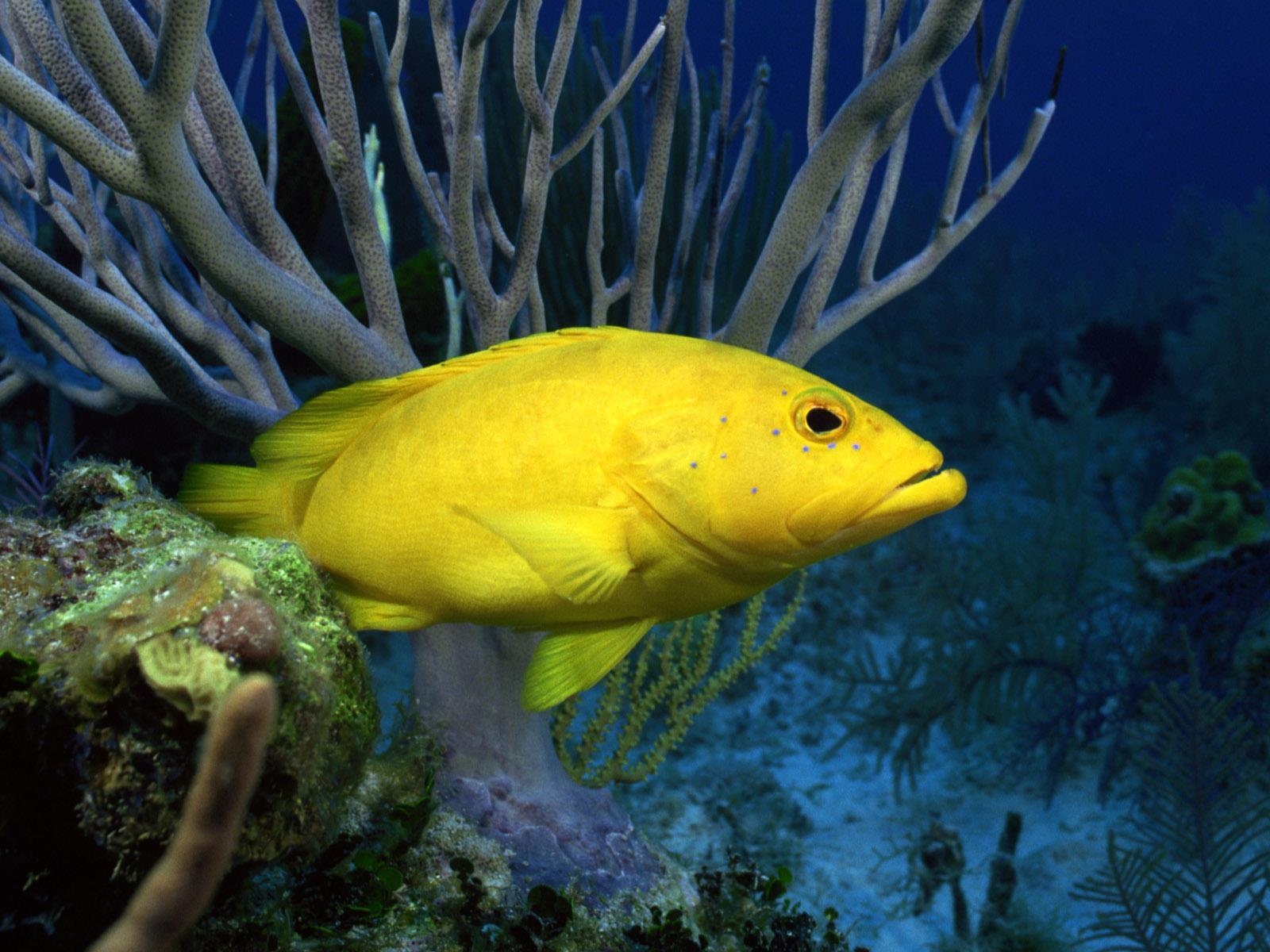vie-sous-marine_underwater_03