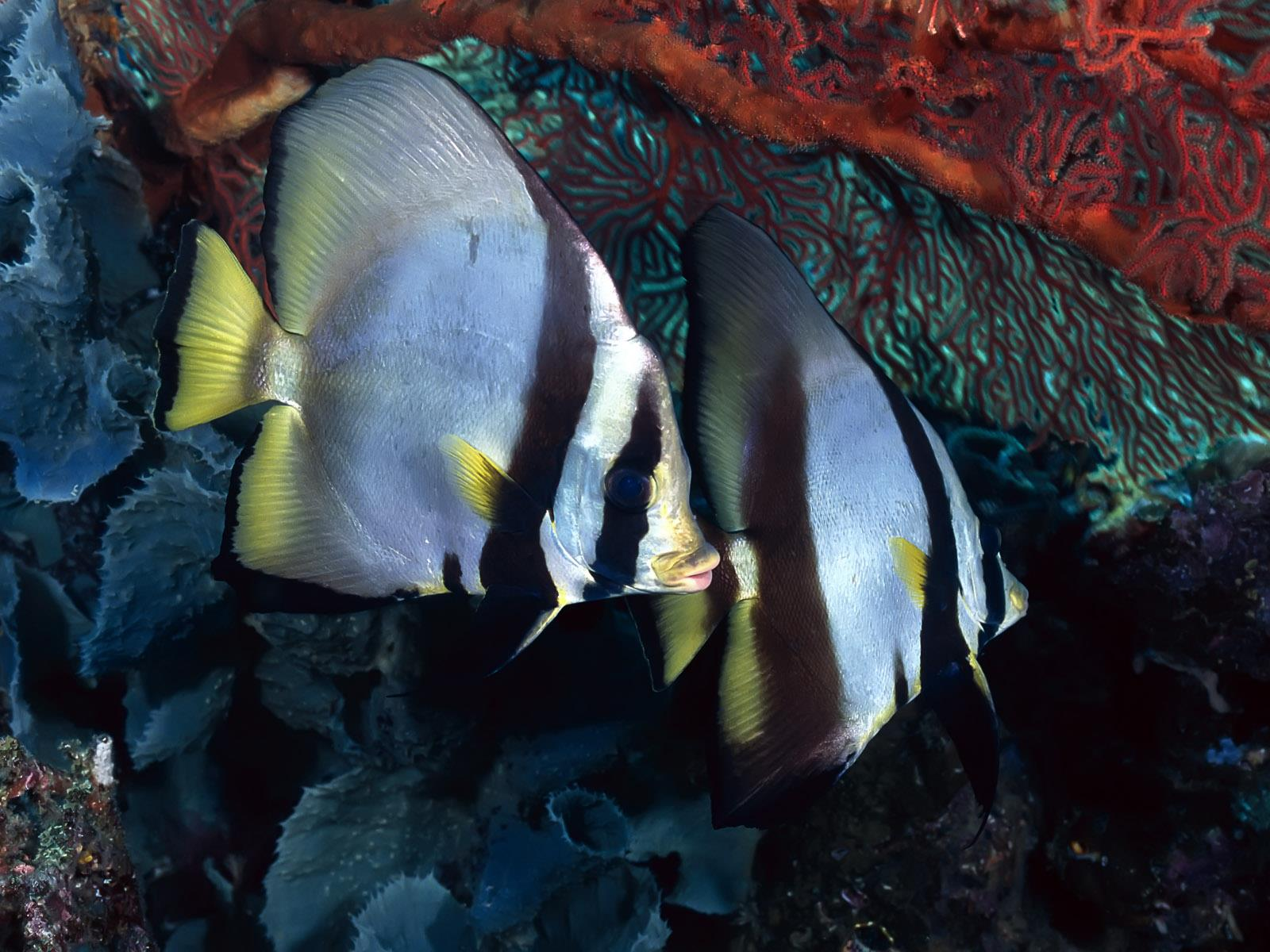 vie-sous-marine_underwater_05