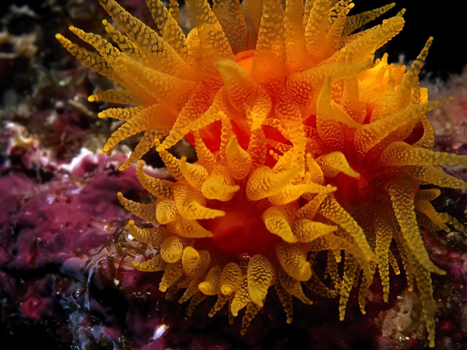 vie-sous-marine_underwater_06