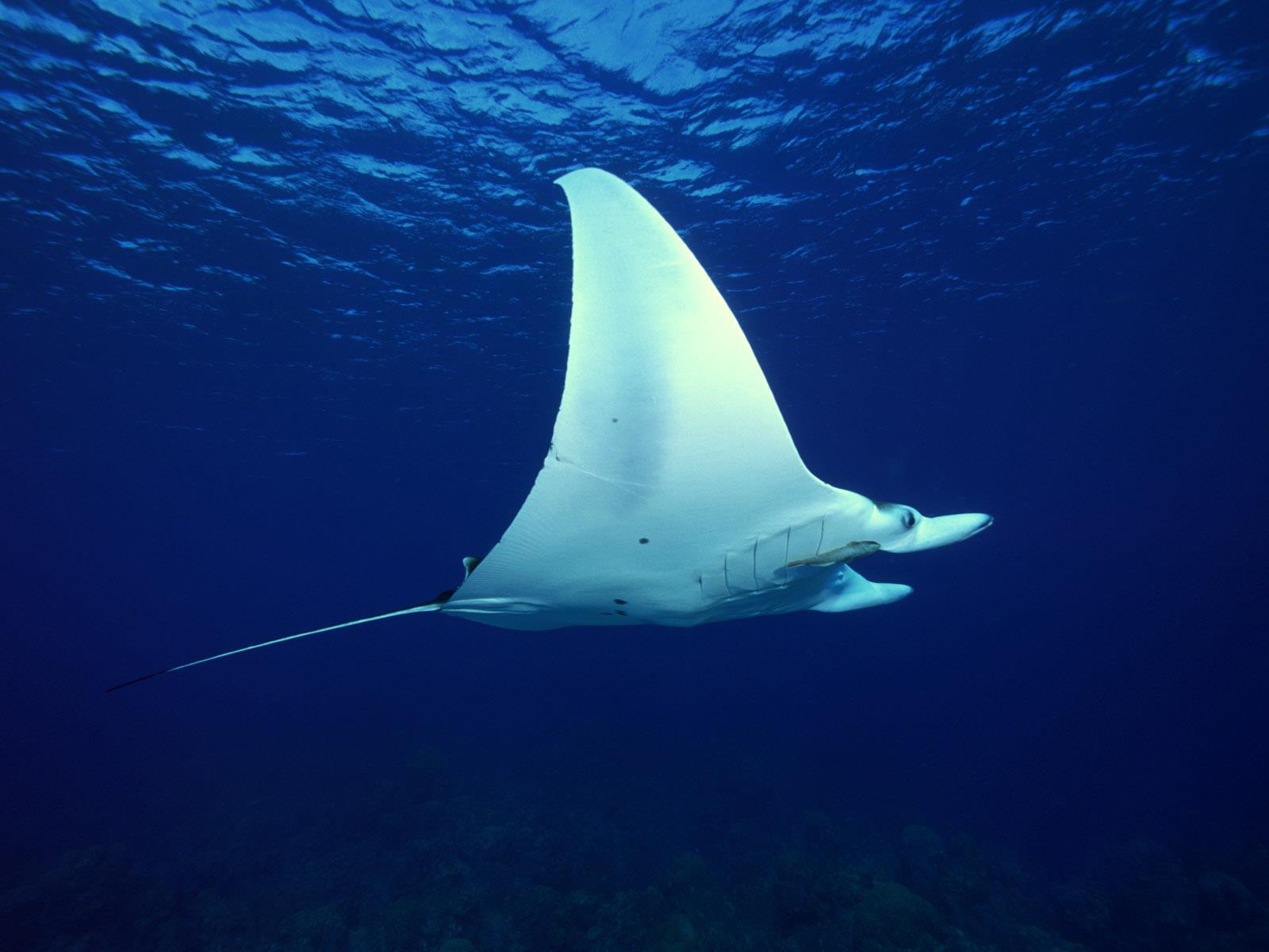 vie-sous-marine_underwater_10