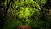 arbres-et-forets-en-pleine-nature_widescreen_03