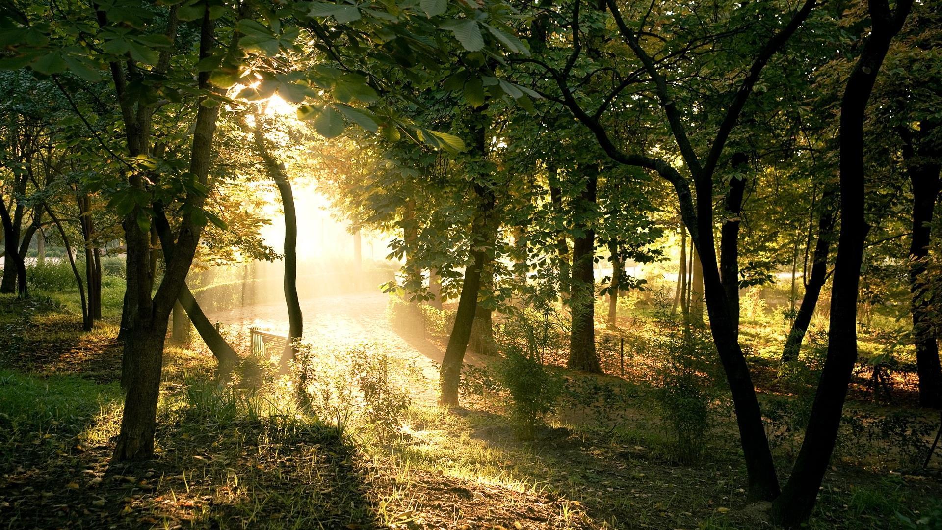 arbres-et-forets-en-pleine-nature_widescreen_04