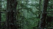 arbres-et-forets-en-pleine-nature_widescreen_06