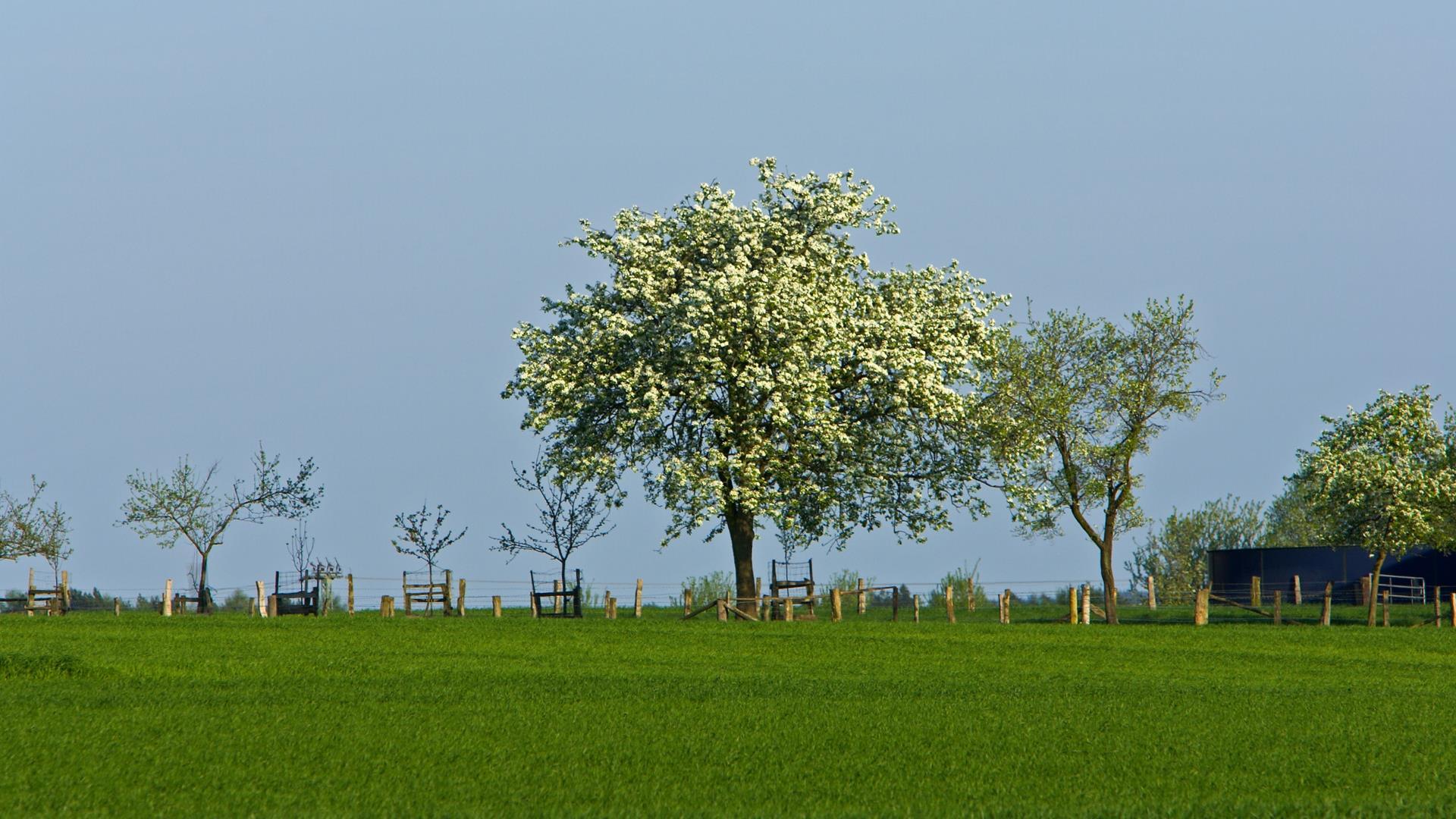 arbres-et-forets-en-pleine-nature_widescreen_07