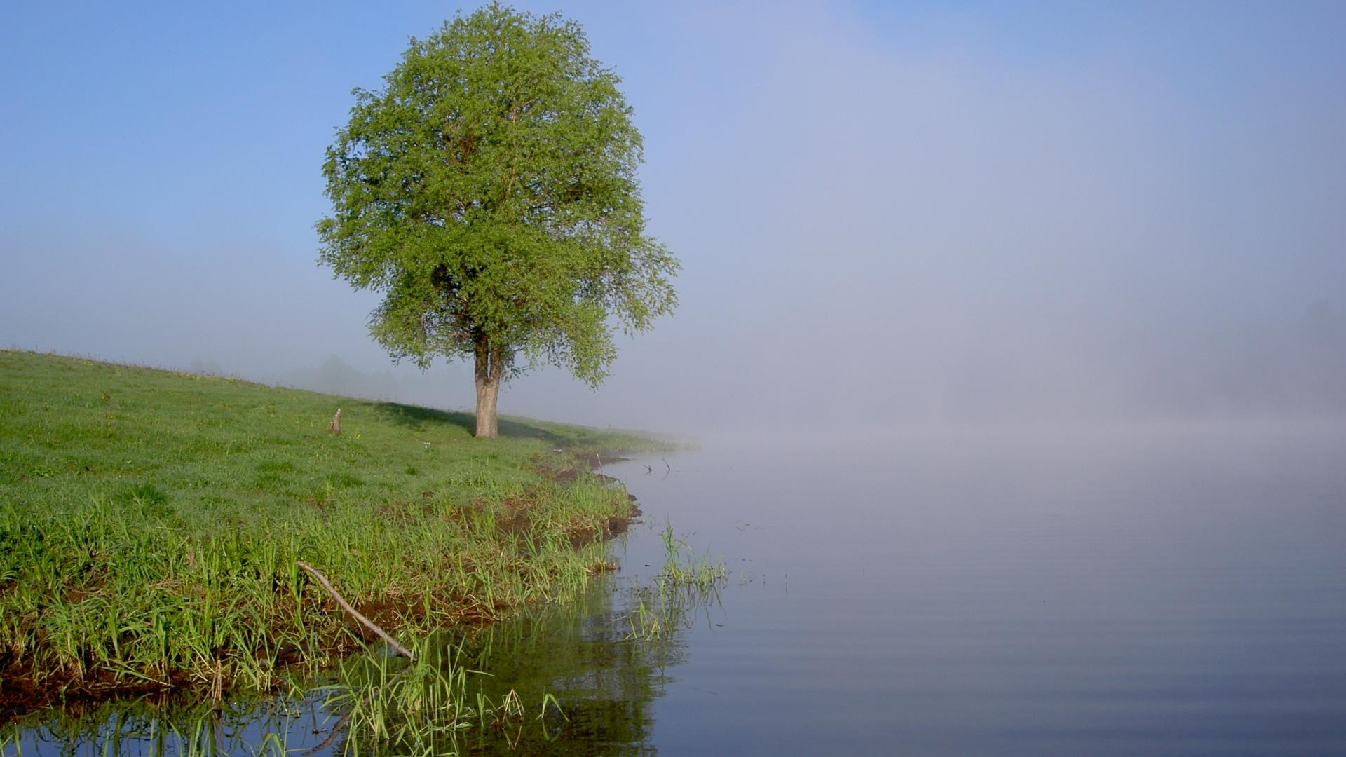 arbres-et-forets-en-pleine-nature_widescreen_08