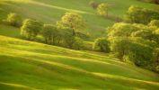 arbres-et-forets-en-pleine-nature_widescreen_09