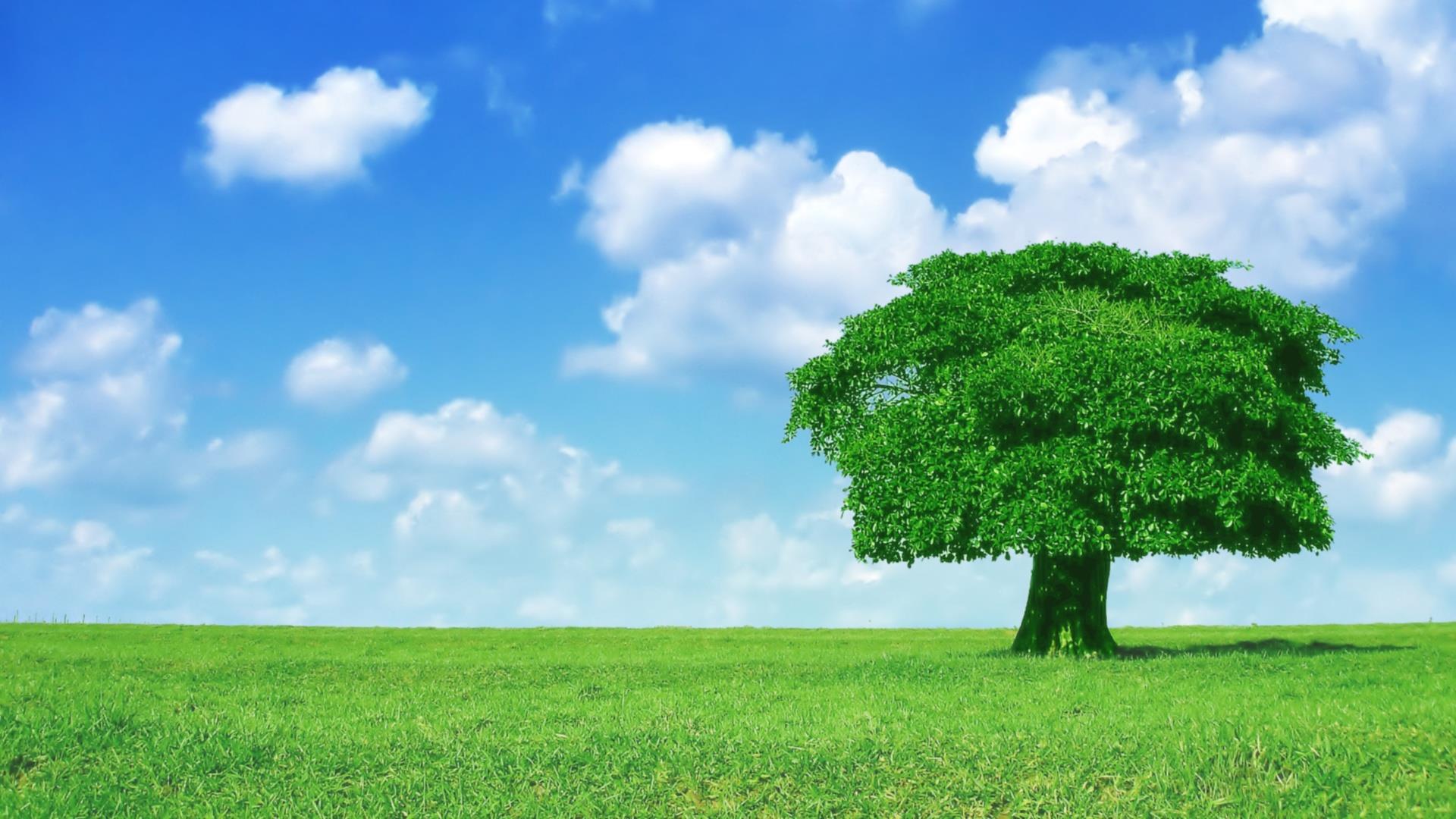 arbres-et-forets-en-pleine-nature_widescreen_10